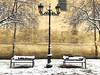 Winter is here (yanitzatorres) Tags: tree orange yellow gold snow nieve simétrico simetría febrero winter invierno spain españa larioja logroño farolas nieves ramas árbol bancos sillas