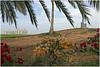 golf 24 (beauty of all things) Tags: vae uae rasalkhaimah sports golf sport flowers blumen