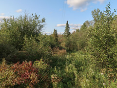 Picked you up a batch of the classic TYPICAL SCENERY OF THE NORTHERN LOWER PENINSULA of Michigan in the late summer. (Tim Kiser) Tags: 2017 20170909 airportroad atlanta atlantamichigan averytownship averytownshipmichigan averytownshiplandscape img3493 michigan michiganlandscape montmorencycounty montmorencycountymichigan montmorencycountylandscape september september2017 cutoverland cutoverlandscape electriclines electricpole landscape latesummer latesummerlandscape latesummerplants northmichigan northeastmichigan northeasternmichigan northernlowerpeninsula northernmichigan northernmichiganlandscape overgrownarea overheadelectriclines overheadpowerlines plantcommunity plantlandscape plants powerlinerightofway powerlines summer summerlandscape telephonepole transmissionlinerightofway utilitypole unitedstates us