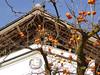 17i1953 (kimagurenote) Tags: 柿 カキ kaki diospyros diospyroskaki fruit 福島県三島町 mishimafukushima