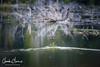 Castor sauvage, Sacacomie, Québec (Claude-Olivier Marti) Tags: canada amériquedunord nature castor beaver wildanimals wildlife barrage sacacomie nikon200500mmf56 nikon d810