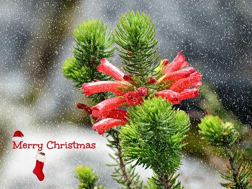 Merry Christmas.