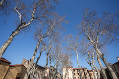 2016-03-04 - 20160304-018A0633 (snickleway) Tags: france canonef1740mmf4lusm ceret céret languedocroussillonmidipyrén languedocroussillonmidipyrénées fr