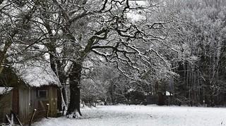 Der erste Winterspaziergang; Bergenhusen, Stapelholm (21)