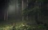 Whispering Forests (Netsrak) Tags: alpen natur licht nebel mist fog kleinwalsertal at österreich mittelberg hirschegg riezlern
