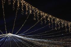 Bucharest Christmas Market 2017 (WT_fan06) Tags: bucharest bucuresti christmas market targ craciun artsy aesthetic night noapte light lumina brad tree tradition traditional happynewyear newyear 2017 iarna winter city nikon d3400