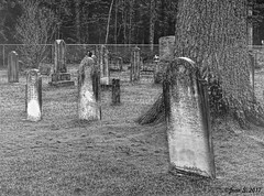 ... (Jean S..) Tags: graves cemetery tree fence grass monochrome bw blackandwhite stone