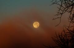 Dec 2017 Supermoon (Gene1138) Tags: canon70d canon canon28300mmeff3556l moon mothernature supermoon colorado sunrise