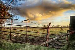 (OutdoorMonkey) Tags: gate gateway farmland field somerset levelsandmoors earlakemoor rust rusting neglected cloud morning pasture landscape