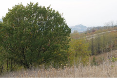 RovereSarezzano (vale_1979) Tags: big tree village