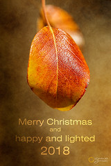 Merry Christmas for all photography lovers! (ILO DESIGNS) Tags: christmas 2017