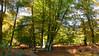 New Forest NP, Hampshire, England (east med wanderer) Tags: england hampshire uk newforestnationalpark autumn woodland beech oak holly bracken lyndhurst