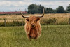 Who's looking at who. (crafty1tutu (Ann)) Tags: travel holiday 2017 unitedkingdom uk england lincolnshire animal cattle highlandcattle bull field paddock crafty1tutu canon7dmkii ef100400mmf4556lisiiusm anncameron