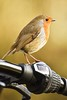 On My Bike. (Cycling Saint) Tags: nikond750nikkor70300f456vr robin birds aylestonemeadows wildlife leicester