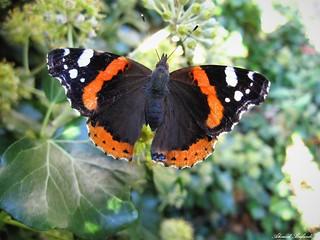 Butterfly 1537