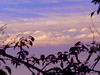Sunset 20151119 (caligula1995) Tags: 2015 clouds plumtree sisters sky sunset