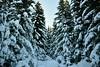 Happy New Year 2018! DSC_0513 (Me now0) Tags: никонд5300 витоша europe българия европа nikond5300 micronikkor40mm winter зима планина mountain snow сняг борове боровидървета pinetrees