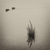 DSCF8478mono (ManFromOz) Tags: ©geoffsmith gemaxphotographics mono wentworthfallslake bluemountains mist