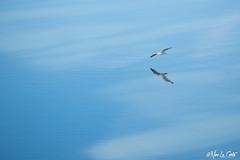 Gabbiano (Nino La Corte) Tags: tevere roma water nature bird sky freedom reflection wildlife summer daylight travel traveling visiting lake seagulls wind composure dawn river