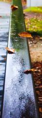 rail (avflinsch) Tags: ifttt 500px water rain abstract leaf art wet rail