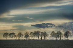 Trees (Jan van der Wolf) Tags: map154277v trees tree bomen sky clouds silhouettes wolken landscape landschap