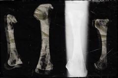 Bone yard-11822 (Poetic Medium) Tags: stilllife rni blender kitcamghostbird snapseed multipleexposure ipod bones