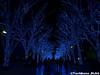 aonodokutsu002 (et_dslr_photo) Tags: xmas illumination 青の洞窟 shibuya yoyogi blueled night nightview nightshot hdr