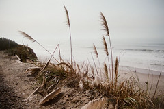 La Selva Bluffs (iamclint9614) Tags: bluffs landscape nature beach ocean 35mm 35mmphotography filmphotography analogphotography fuji400 canonae1 canon abandoned hike hking