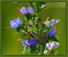 "Praise God's Creatures among earths beauty ~*~ (Darrell Colby "" You Call The Shots "") Tags: god creatures praise earth merrychristmas londonontario ontario canada flowers darrellcolby"