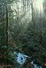 Morning Light (johnscratchley) Tags: landscape winter forests fog gowland tod hdr vancouverisland