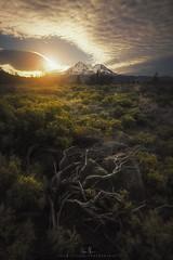 Mt. Shasta - NorCal (wesome) Tags: adamattoun mtshasta