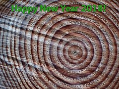 Here's to.... (rockwolf) Tags: hpn18 happynewyear lines rings log wood shropshire rockwolf