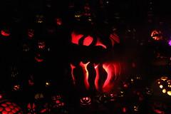 IMG_6685 (comtrag) Tags: jackolanterns rogerwilliamszoo rhodeisland halloween pumpkins pumpkincarving