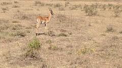 2017-12-28 15.23.38 (dcwpugh) Tags: travel nairobi kenya safari nairobinationalpark
