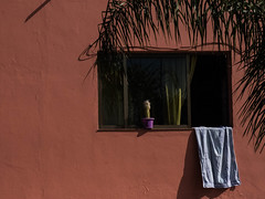 Window (Georgie Pauwels) Tags: window open lagomera sun color cactus fabric cloth fujifilm candid street streetphotography