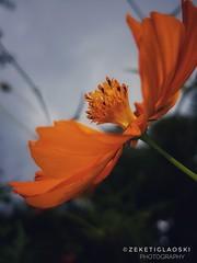 Flower (zekethegreat) Tags: flower macroshot