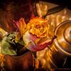 Old Rose (Pieter Musterd) Tags: roos rose koper copper flower bloem pietermusterd musterd canon pmusterdziggonl nederland holland nl canon5dmarkii canon5d denhaag 'sgravenhage zuidholland paysbas