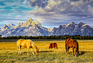 horses grazing at Elk Flats