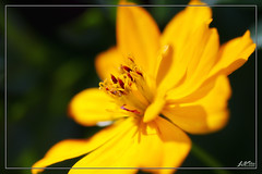 IMG_4678 (jlpvina) Tags: leo vina photography canon eos 7d baguio philippines flowers nature