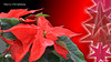 Merry Christmas (2) (andantheandanthe) Tags: merry christmas december 24 25 christmasdecorations decorations decoration stars star feast day eve christmasflower christmasstar flower blant red