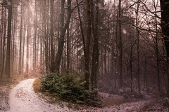 Winter paints pictures (Petr Sýkora) Tags: les mood sníh zima nature winter snow forest trees inthewinter czech