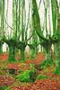 El otoño ya pasó..!! (Olynbe) Tags: mañaria urkiola bizkaia bosque arboles otoño hojas paísvasco basquecountry olynbe hayedo mendia