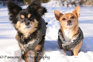 12/12/A/The Boyz (winter wonderland)