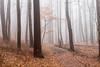 20171223 (Homemade) Tags: woods fog trees forest trail preserve hike nature ny newyork westchestercounty westchesterlandtrust lewisboro southsalem nikon2470mmf28 nikkor2470mmf28 leonlevypreserve