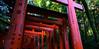 伏見稻荷大社 千本鳥居 (sunnyha) Tags: japan japón japão japon outdoors fushimiinaritaisha torii day kyoto kioto otoño architecture red plant religion culture culturejaponaise culturetradition color colour colours sonyilce7rm2 sony a7rll a7rm2 1635mm ef1635mmf4lisusm photographier photograph 伏見稻荷大社 千本鳥居 日本 京都 鳥居 攝影 寫真 ふしみいなりたいしゃ