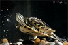 Turtle (Cristian Lupi 72) Tags: tartaruga turtle acqua tartarughiera rettile