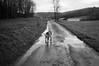 (Paysage du temps) Tags: 2018 20180104 film hp5 ilford leicam6 summicron35mm chien dog charosse savoie route road pluie rain humide wet ferme farm