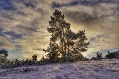Auf dem Raßberg (clemensgilles) Tags: snow schnee eifellandschaft eifel wälder trees