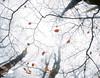 AUTUMN SPIRAL (Anderony) Tags: niebla fog otoño autumn urbasa navarra arboles hayas hojas color colour canon 5dmarkii espiral spiral
