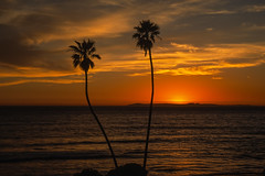 San Clemente, California: T Street Sunset No.5 (rocinante11) Tags: california sanclemente orange palms 1000v40f